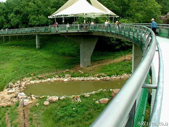 合肥野生动物园/猛兽放养区