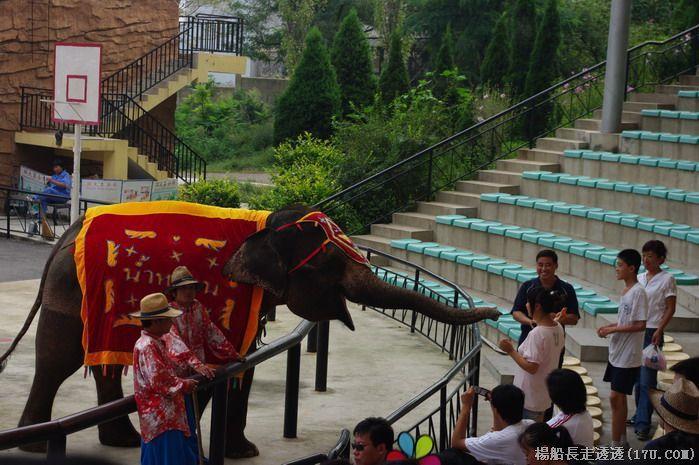 再游大连-大连森林动物园泰国大象表演