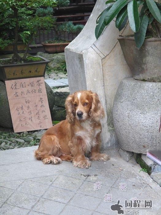 宏村可爱的小动物们