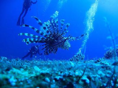 沙巴潜水,难忘的一片蓝色图片