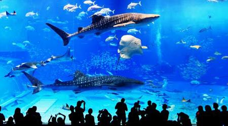壁纸 海底 海底世界 海洋馆 水族馆 桌面 450_250